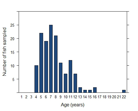 Number of southern Gulf of Carpentaria barramundi of each age that have been sampled when one meter long.