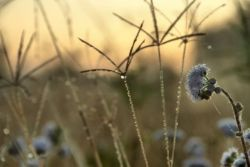 Weeds, pest animals and ants