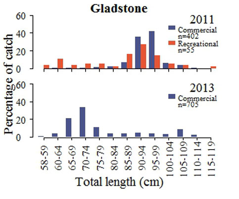 Length structure of the commercial and recreational barramundi catch (2011 and 2013) from the Central East Coast. Note: Too few samples were collected 2012 for analysis.