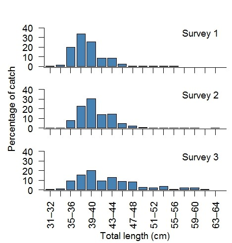 Three histogram graphs showing the length structure of tailor harvested on different surveys