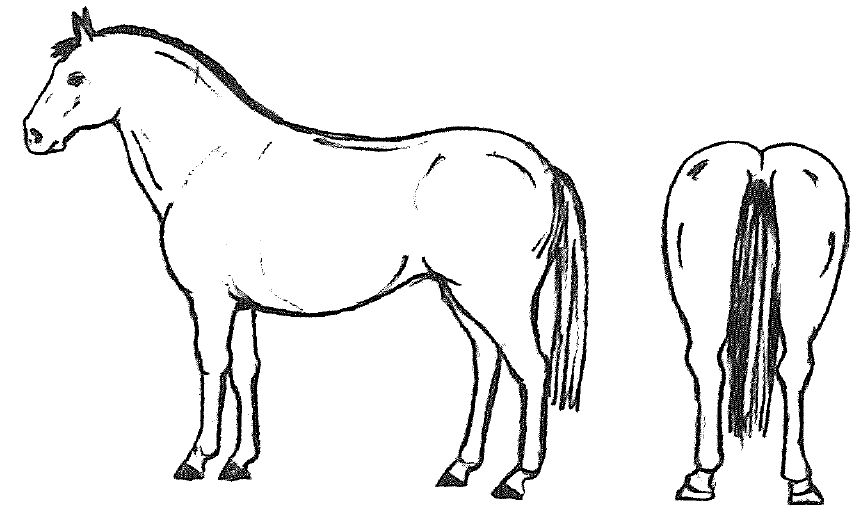 graphic of horse with body condition score of 5
