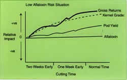 In low-risk aflatoxin situations, cutting at the normal time optimises gross returns