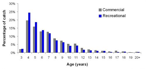 2012 age structure of the commercial (grey) and recreational (blue) catch of snapper.