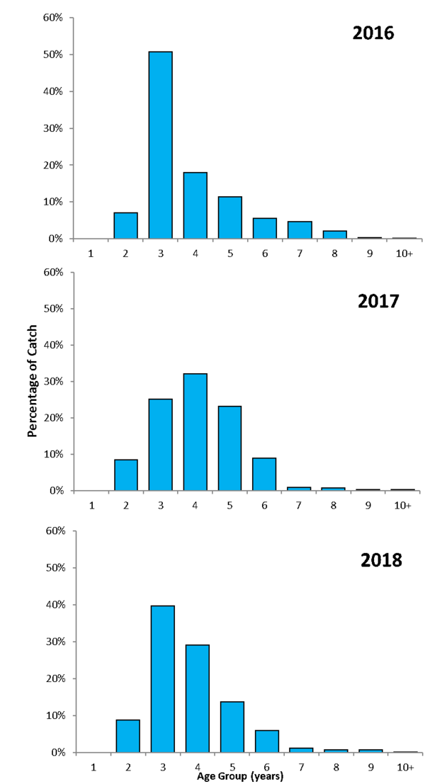 Percentage of catch (y axis) and Age Group (x axis). for each mullet harvest year 2013 (top graph) to 2015 (bottom graph).