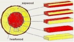 A diagram showing sapwood-heartwood combinations in sawn wood