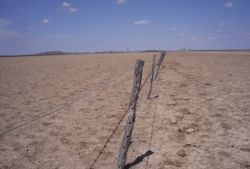 Government drought assistance