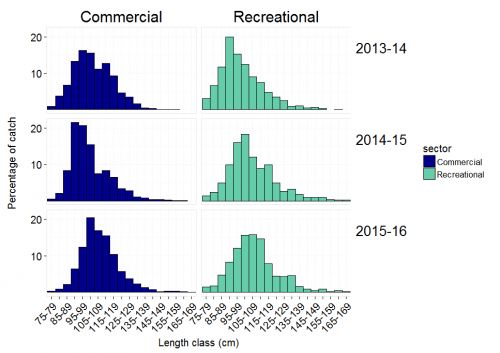 """Percentage of Spanish mackerel in each length class for the commercial and recreational fisheries on the east coast during 2013-14 to 2015-16. """