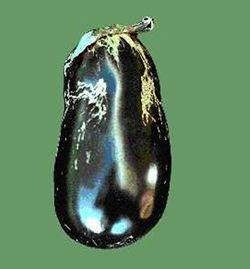 Melon thrips damage to eggfruit