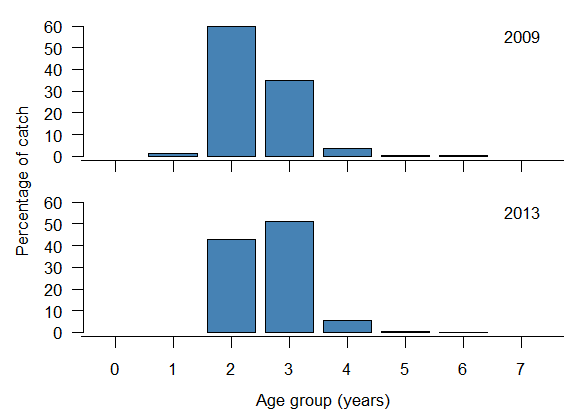 Age frequency of recreationally harvested Tailor in 2009 and 2012. The peak is in 2-year-olds in 2009 and 3-year-olds in 2013.