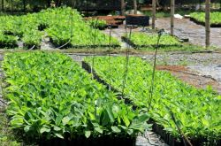 Plant health, pests and diseases