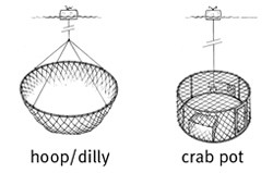 Line drawing of crabbing gear including dillies and crab pots
