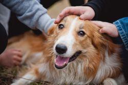 Animal welfare and ethics