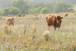Intensive livestock environmental management