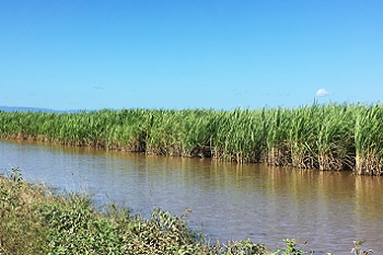 Sugarcane fields flooded in Far North Queensland