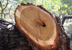 Invitation to purchase sandalwood