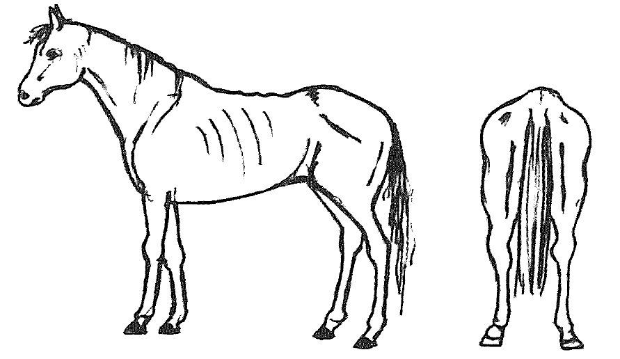 graphic of horse with body condition score of 3