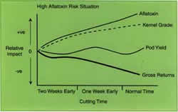Graph showing in high-risk alfotoxin situations, early cutting optimises gross returns.