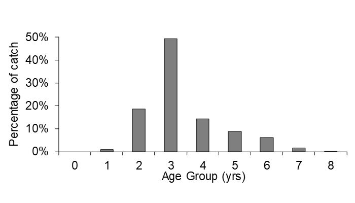 Figure 2 – Age frequency of dusky flathead
