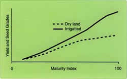 Graph showing hypothetical illustration of relationship between yield and kernal grades and crop maturity index