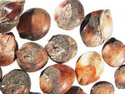 Image of grain mould