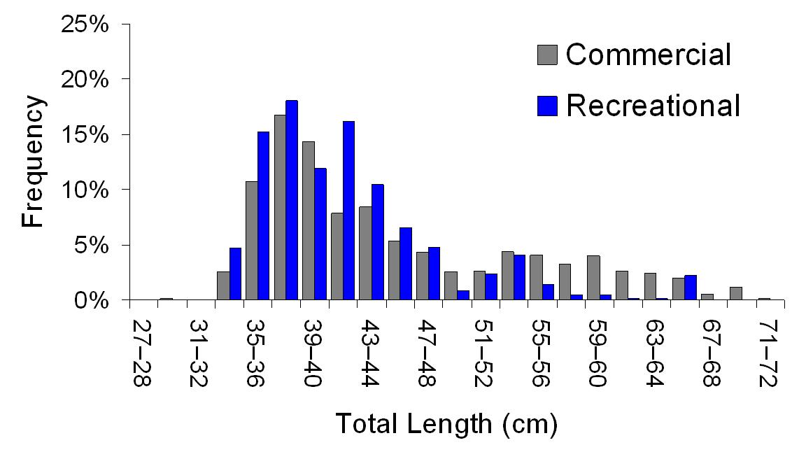 Length structure graph (total length v frequrency) of the 2012 commercial (grey) and recreational (blue) fishery for pearl perch.