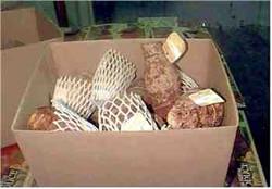 Taro corms in 10kg cartons