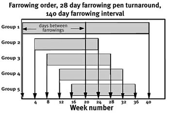 Graph showing 28-day farrowing pen turnaround with a 140-day interval