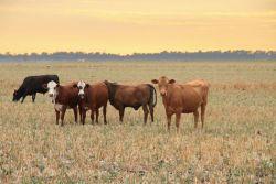 Queensland beef industry
