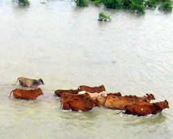 Disaster recovery for livestock farms