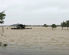 flooded cattle property
